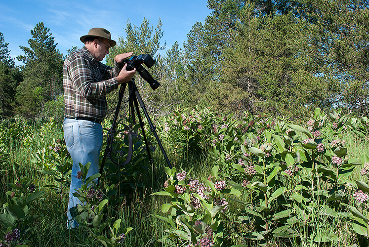 Author in a stand of Common Milkweed